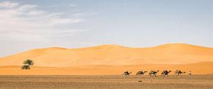 Circuit Fès désert